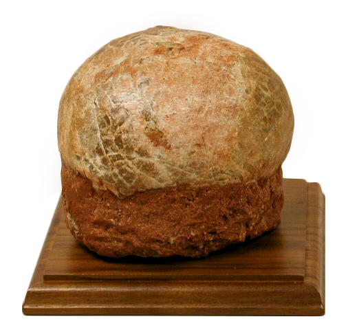 Hadrosaur egg, TSM Collection