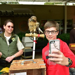 A student takes a selfie with a hawk at Home School Day.
