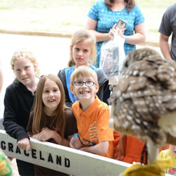 Scouts learn about Cujo, the barred owl, at Scouts Day.