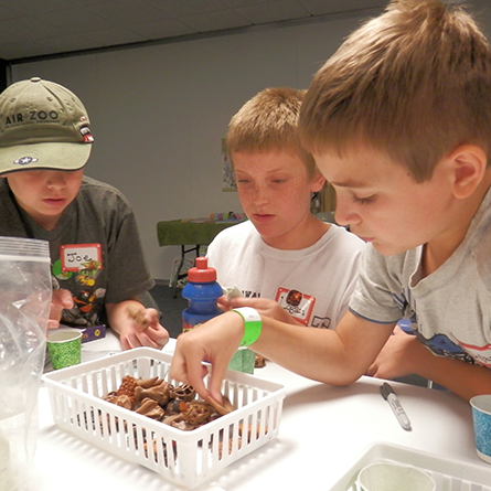 Summer Day Camps - Survival Science