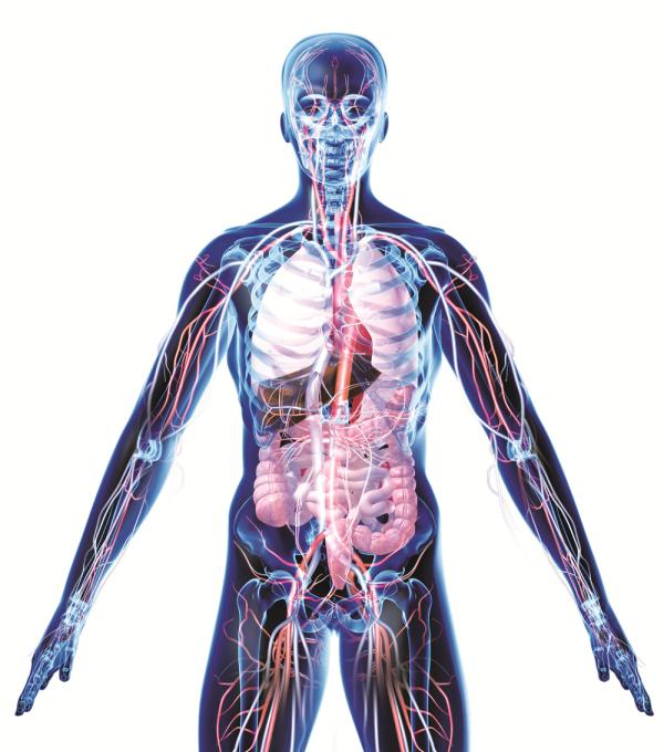 anatomy of nutrition blank resized 600