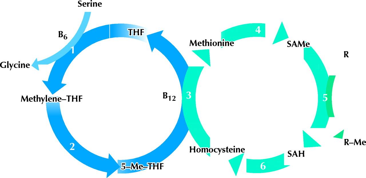 methyl donor, nutrients