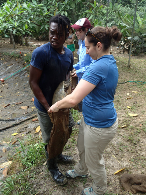 Jacksonville Zoo and Gardens employee assisting with Hicatee Turtle Health Check
