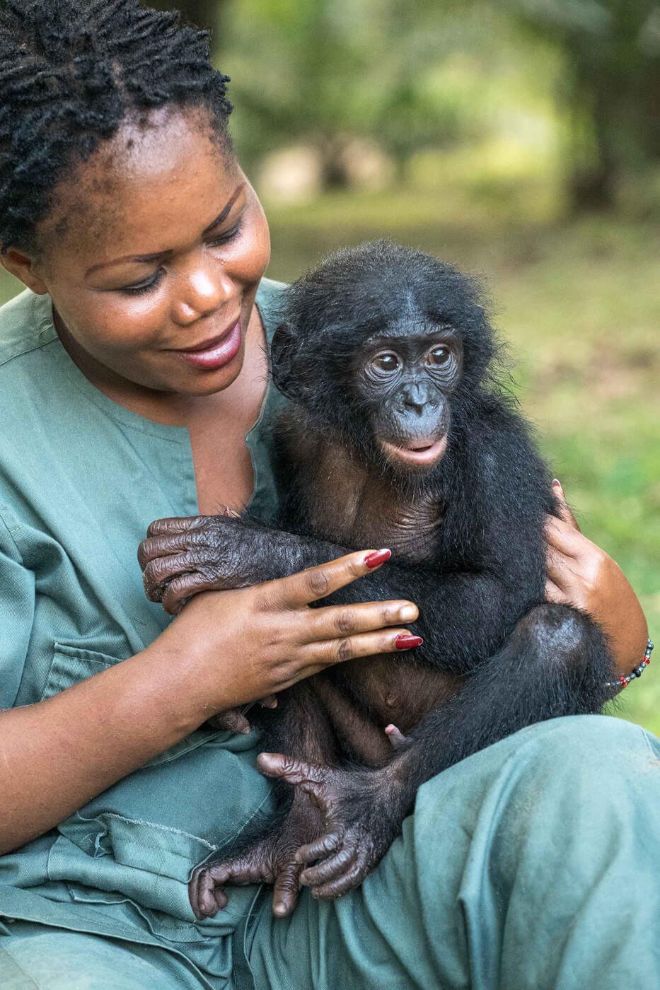 Bonobo sitting on woman's lap