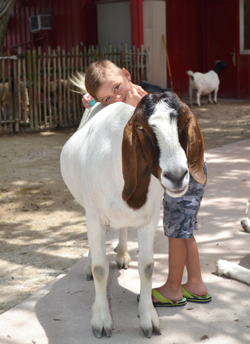 Young boy hugging white and brown goat.