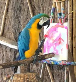 Bird painting.