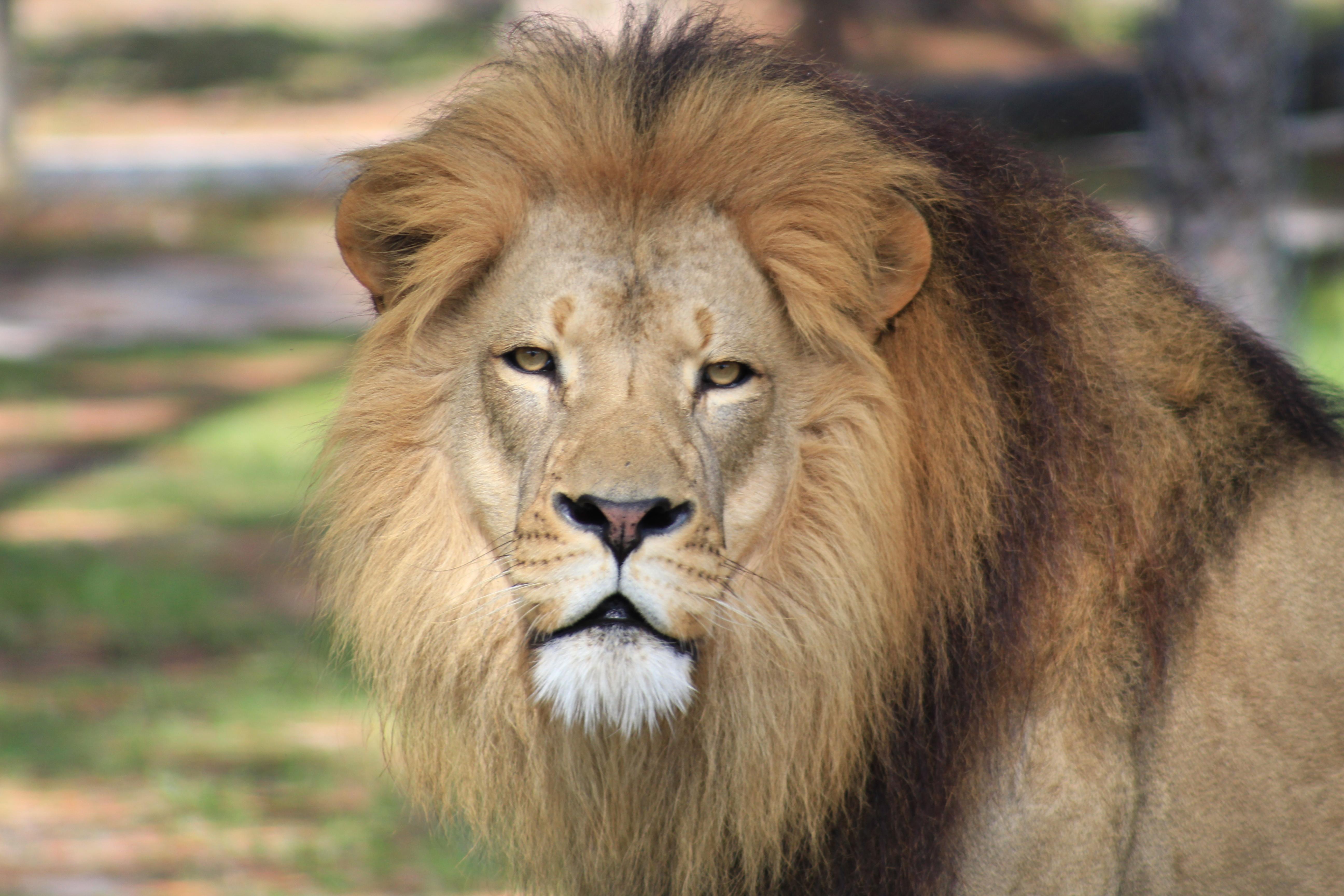 Drive Through Safari & Adventure Park   Lion Country Safari