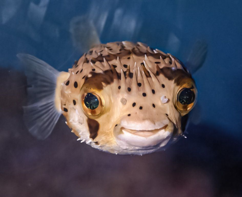 Fish Image